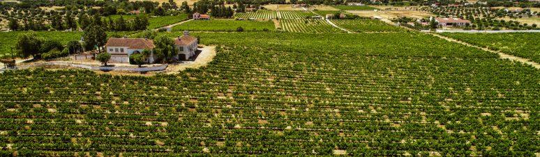 Ségur Estates Redondo Winery (11)