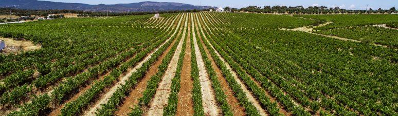 Ségur Estates Redondo Winery (5)