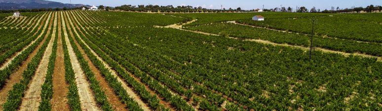 Ségur Estates Redondo Winery (6)