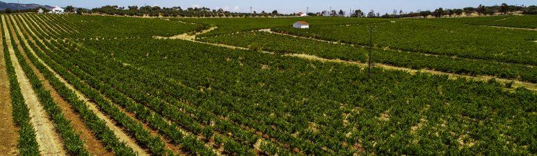 Ségur Estates Redondo Winery (7)