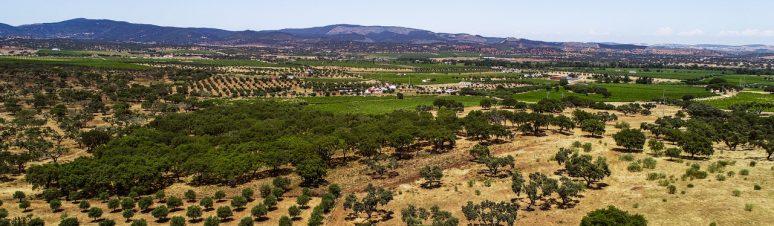 Ségur Estates Redondo Winery (8)