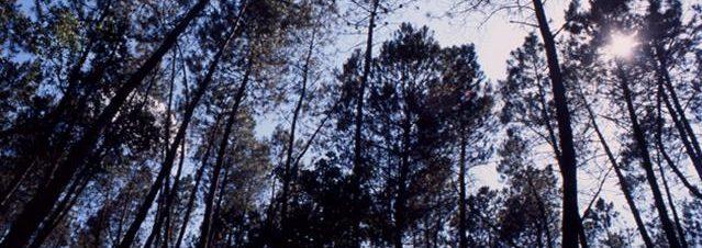defesa floresta