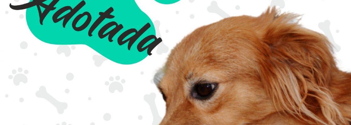 """Campanha de adoção de cães – """"Adota-me"""" – já fez um amigo de quatro patas e uma famí..."""